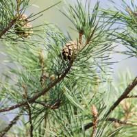 Fagerhultsseminariet – Målet med skogen