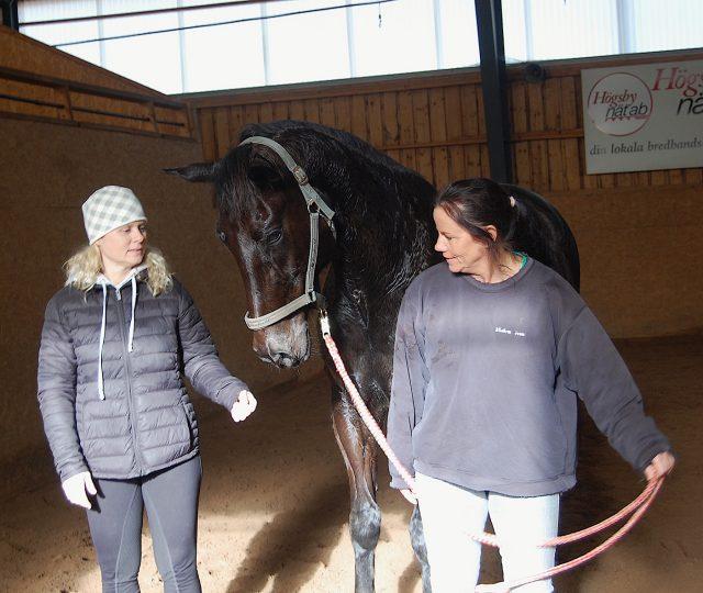 25 händelserika år för hästsportklubben
